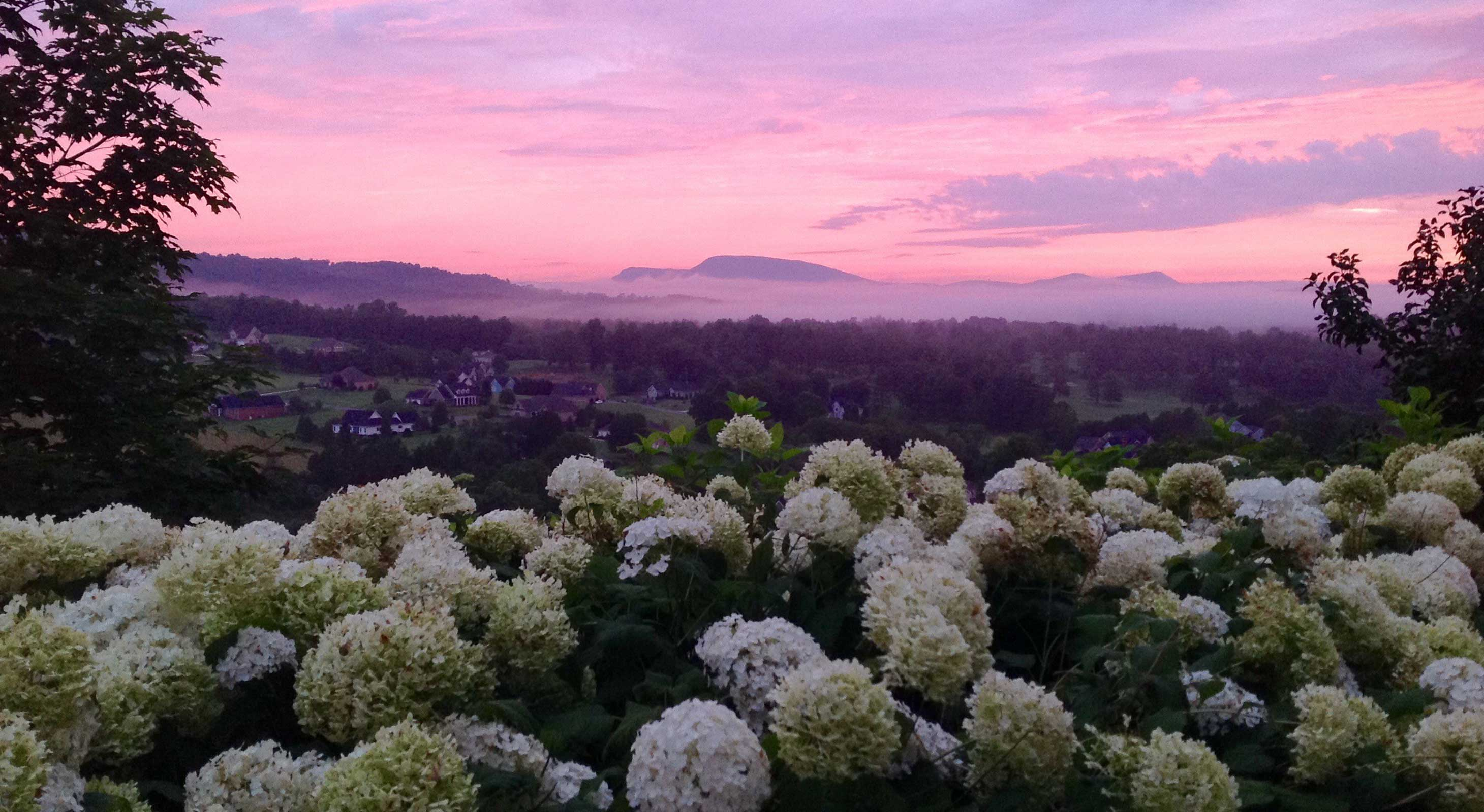 View of Flowers and Mountains at Sunset